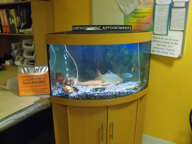 Fish Tank In Children 39 S Outpatients Department Strongbones